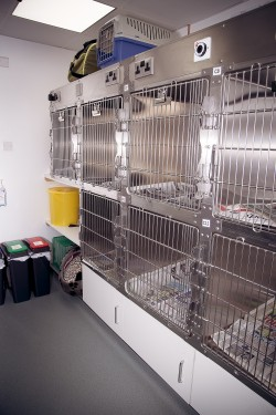 Cat Care At Acorn House Vets
